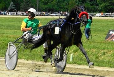 Record de participare pe Hipodrom: 37 de cai in reuniunea de duminica, la Ploiesti!