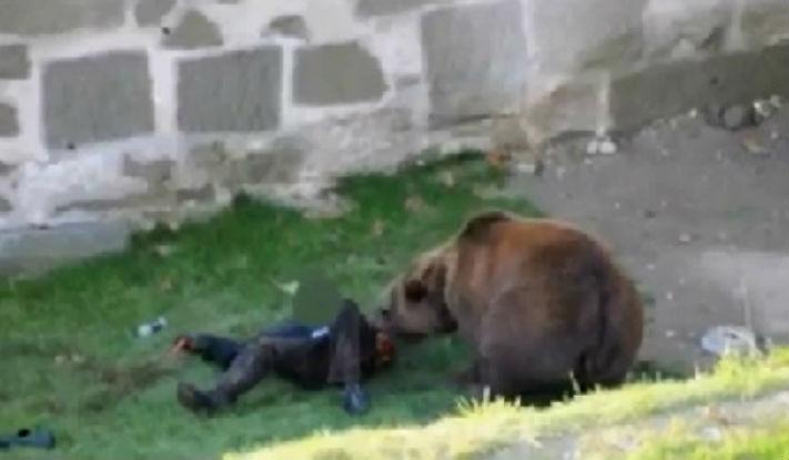 Prahovean nonagenar, atacat brutal de un urs la Valea Doftanei. Autoritatile judetene sunt disperate (UPDATE)