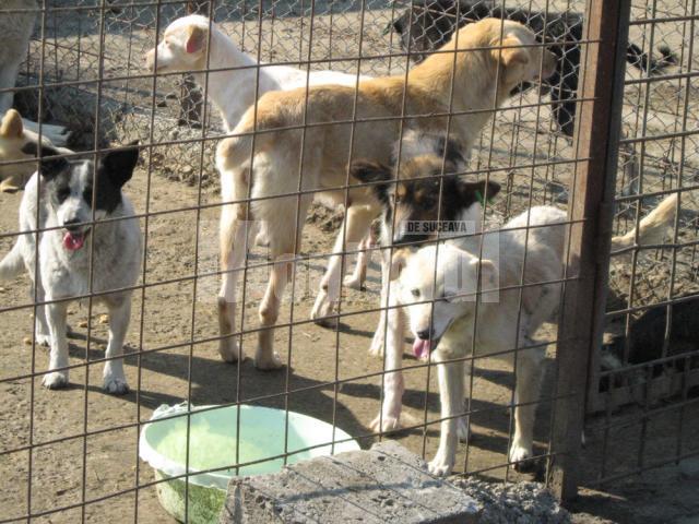 Colecta de hrana pentru adapostul de caini de la Plopeni