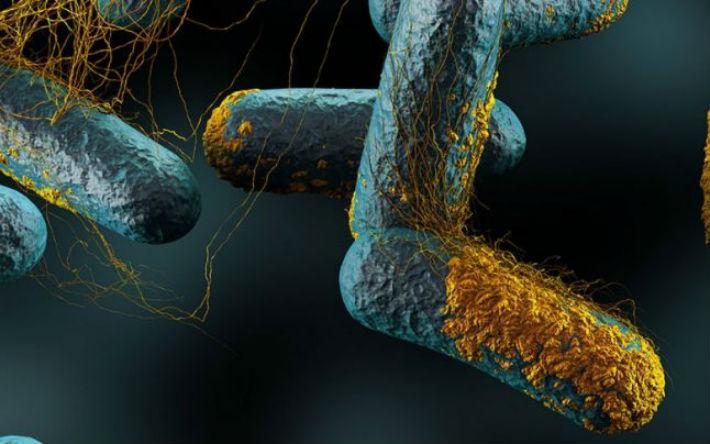 bacterii alimentare