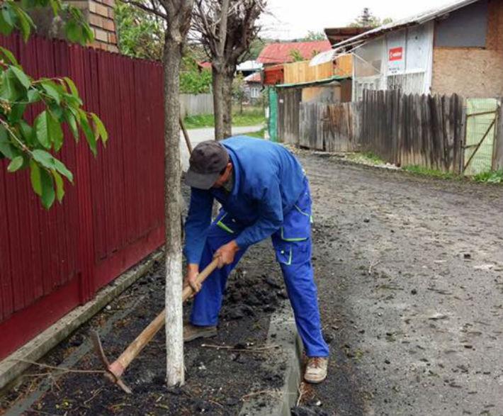 Rusinate in urma articolului, autoritatile din Breaza au decis sa scoata pomii din mijlocul trotuarului