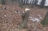 Prahova: Padure taiata ilegal la Baicoi. Autoritatile au fost deja sesizate, dar ancheta merge greu