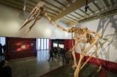 Cel mai mare pterozaur din lume a fost descoperit in Romania (VIDEO)