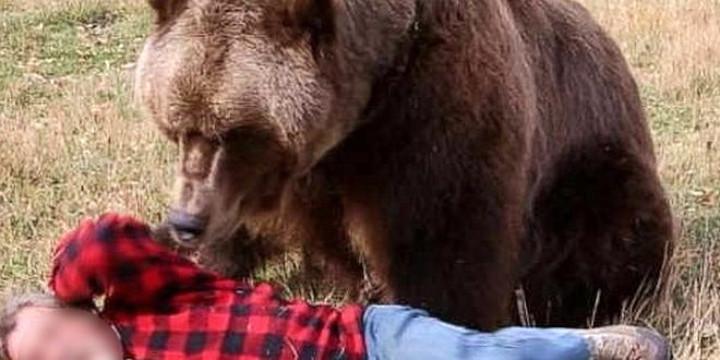 atacat de urs si ranit